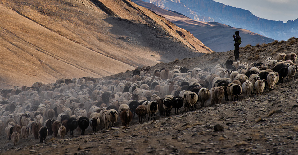 changthang-nomads-photography-7
