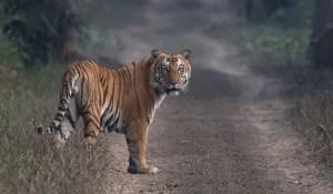 Wildlife Photography - Dudhwa