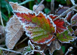 First Frost Photo