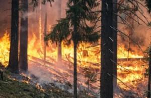 Incendi Legambiente