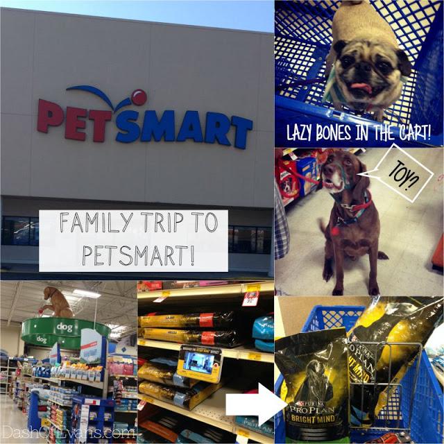 #BrightMind, Pug, Adopting Dogs, Shelter Dogs, Tips for Pet Adoption, PetSmart, Bright Mind Food, Purina