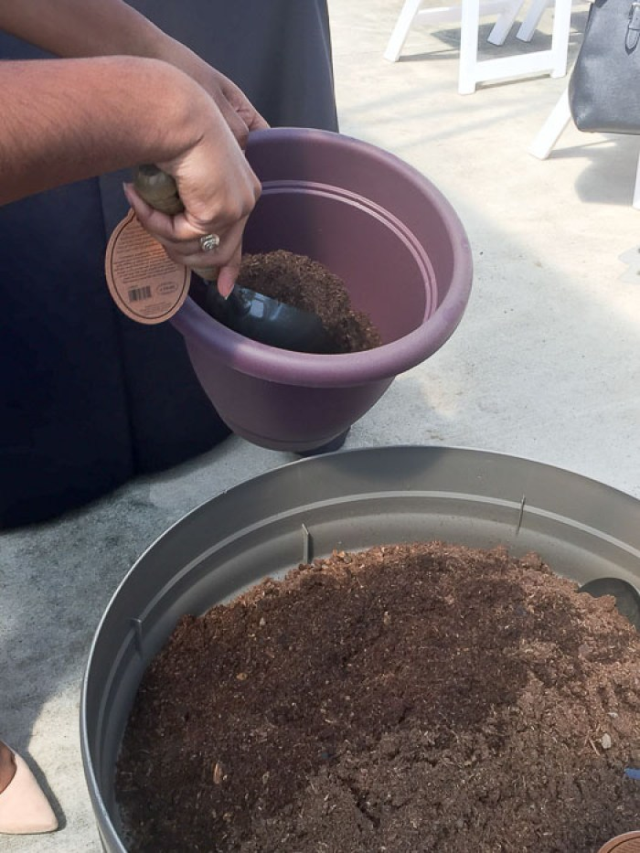 hands troweling soil from one large part into a small purple pot