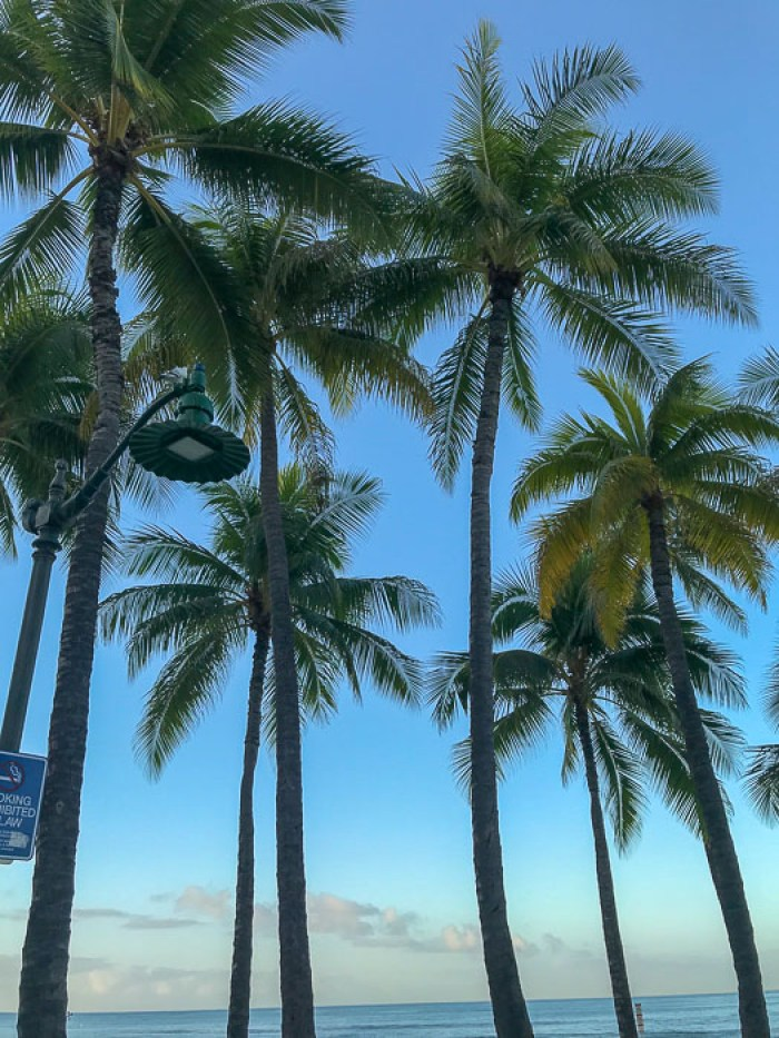 palm trees on Waikiki Beach Oahu Hawaii