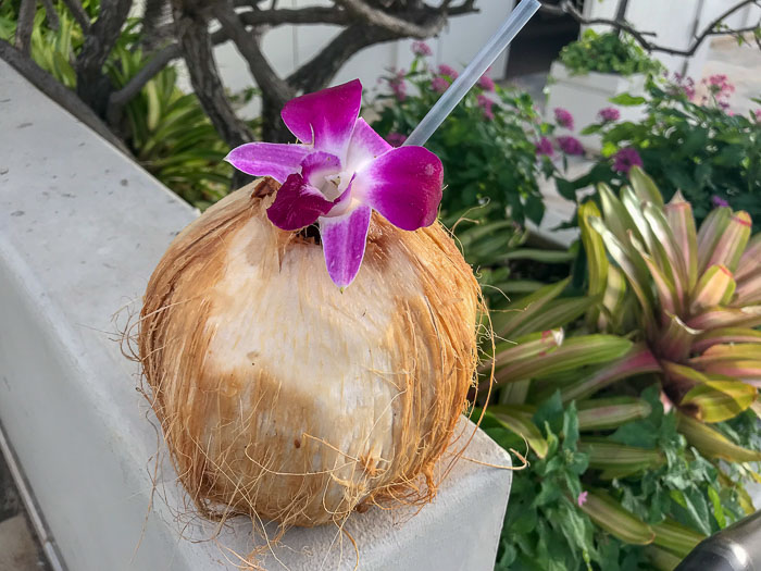 fresh coconut garnished with orchid in Waikiki Oahu Hawaii