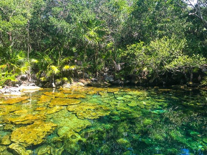 cenote Caleta Tankah Tulum