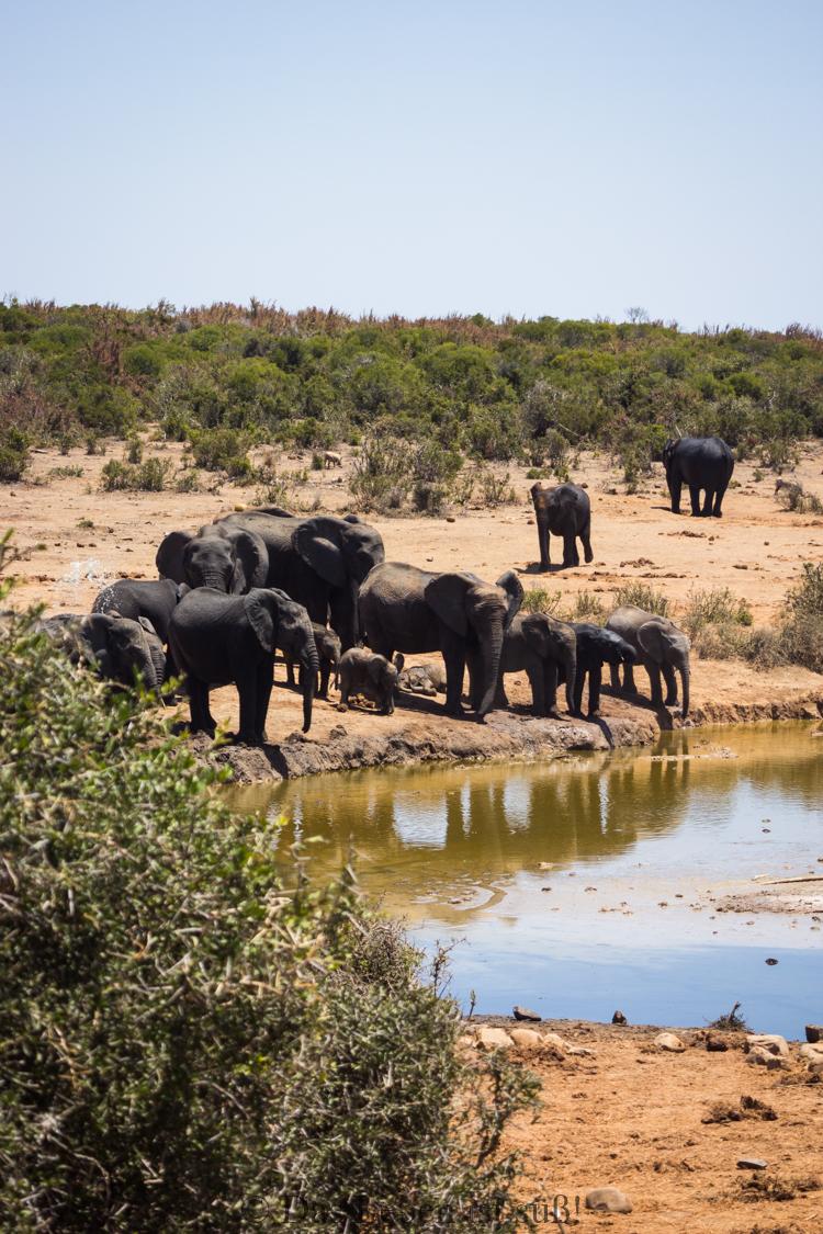 Addo Elephant Park (127 von 307)