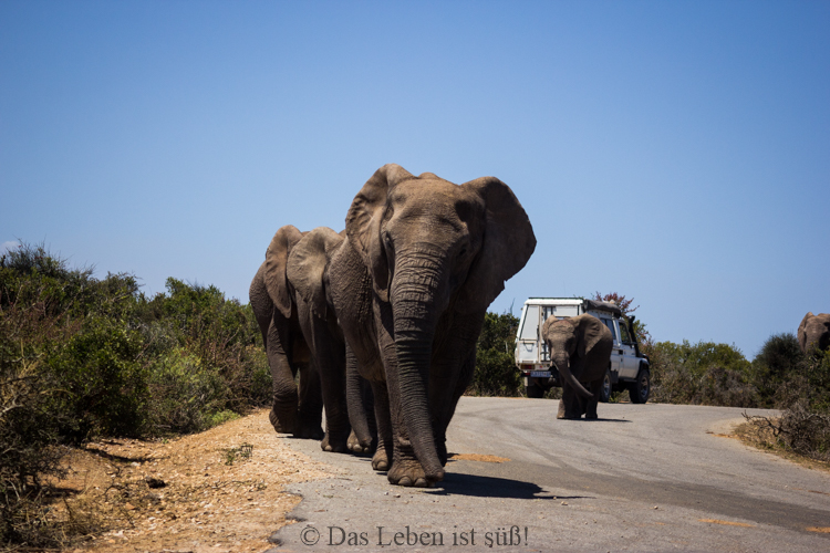 Addo Elephant Park (200 von 307)