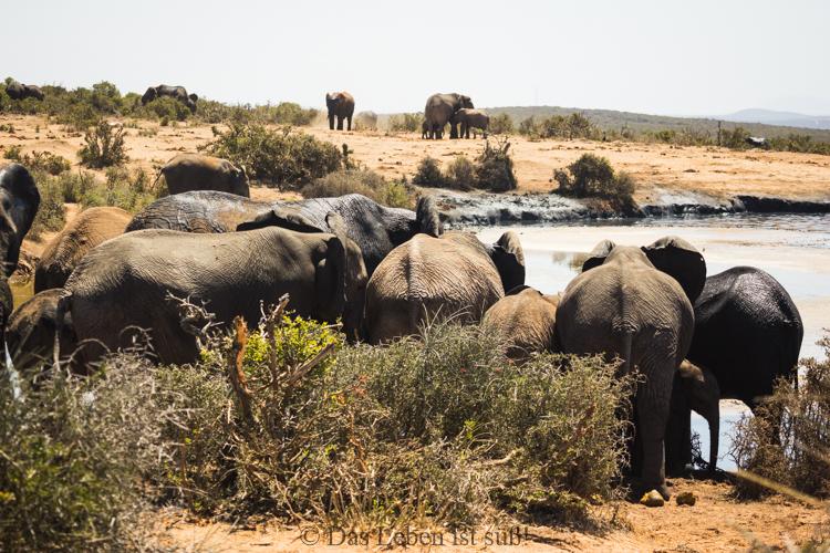 Addo Elephant Park (215 von 307)