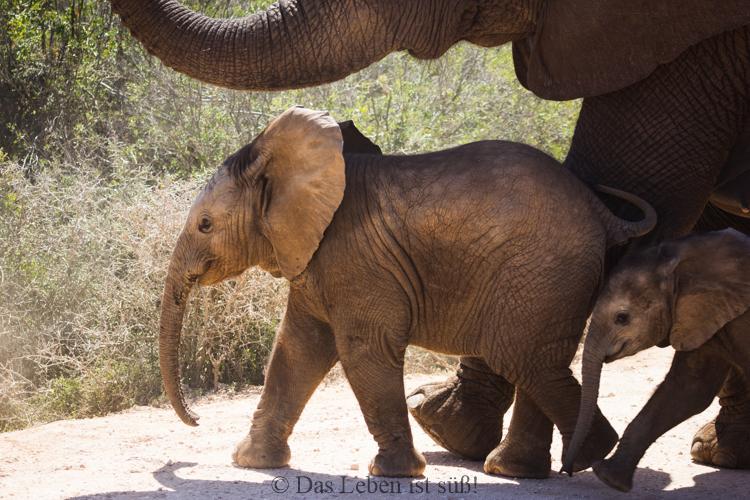 Addo Elephant Park (229 von 307)