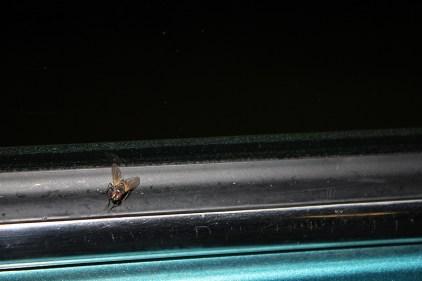 Fridolin die Fliege