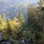 Farchant - Waldlehrpfad Entdeckungen 3