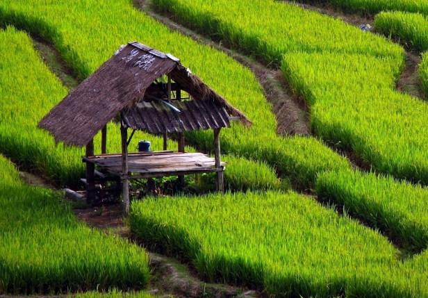 peluang usaha di desa terpencil