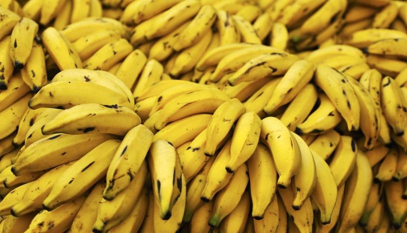 cara menanam pisang terbalik