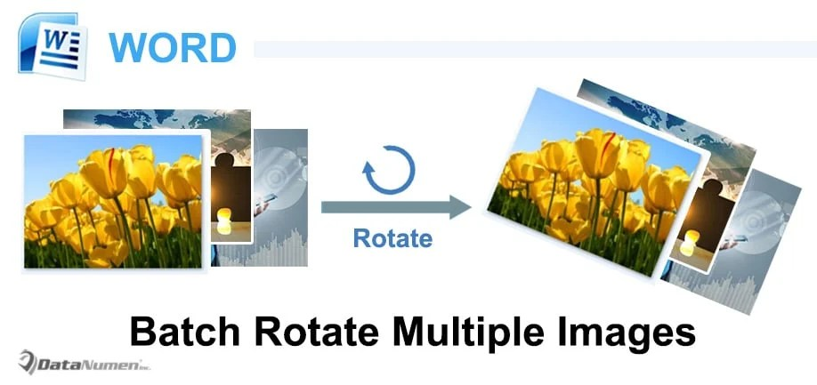 Batch Rotate Multiple Images in Your Word Document