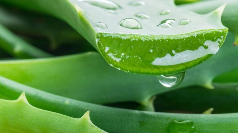 Acidaburn Ingredient Aloe Vera