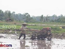 Petani Diharapkan Tetap Produktif di Tengah Pandemi Corona