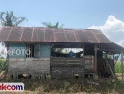 Pulang dari Rantau, Yogi Langsung Tinggal di Tengah Sawah