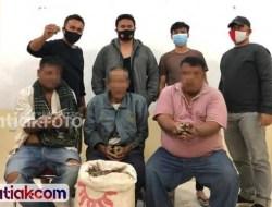 Diduga Jual Kulit Tenggiling, Lansia dan Dua Pria Ditangkap