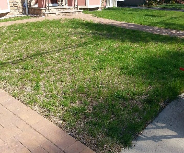 sod-installation-before
