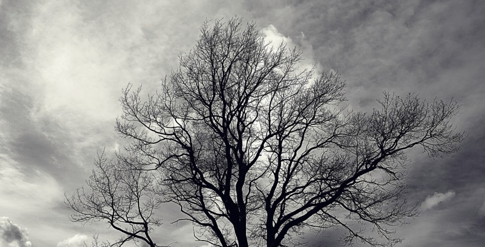 lone tree without leaves in autumn