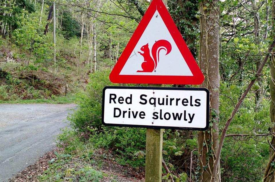 Cumbria Way day 3, Bassenthwaite to Swinside
