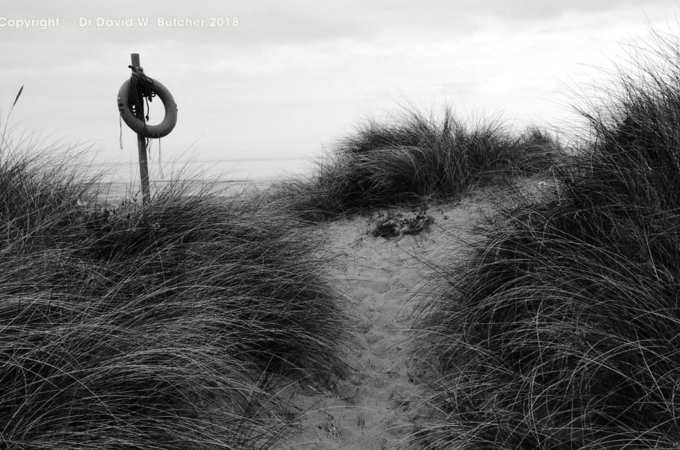 Northumberland Coast Photos Day 2