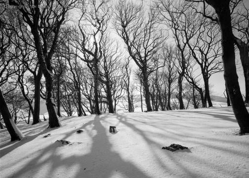 Buxton Grin Low Trees in Winter, Peak District