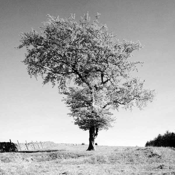 Goyt Valley Lone Tree #5, Peak District