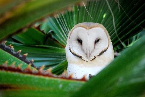 owl in my palm tree