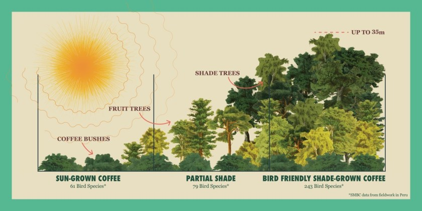Sun-grown vs. shade-grown coffee.