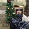 christmas tree left at the curb