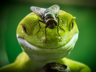 Gecko and Fly