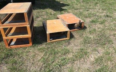 Releasing Bred Hen Pheasants for Wild Bird Hunting in 2019