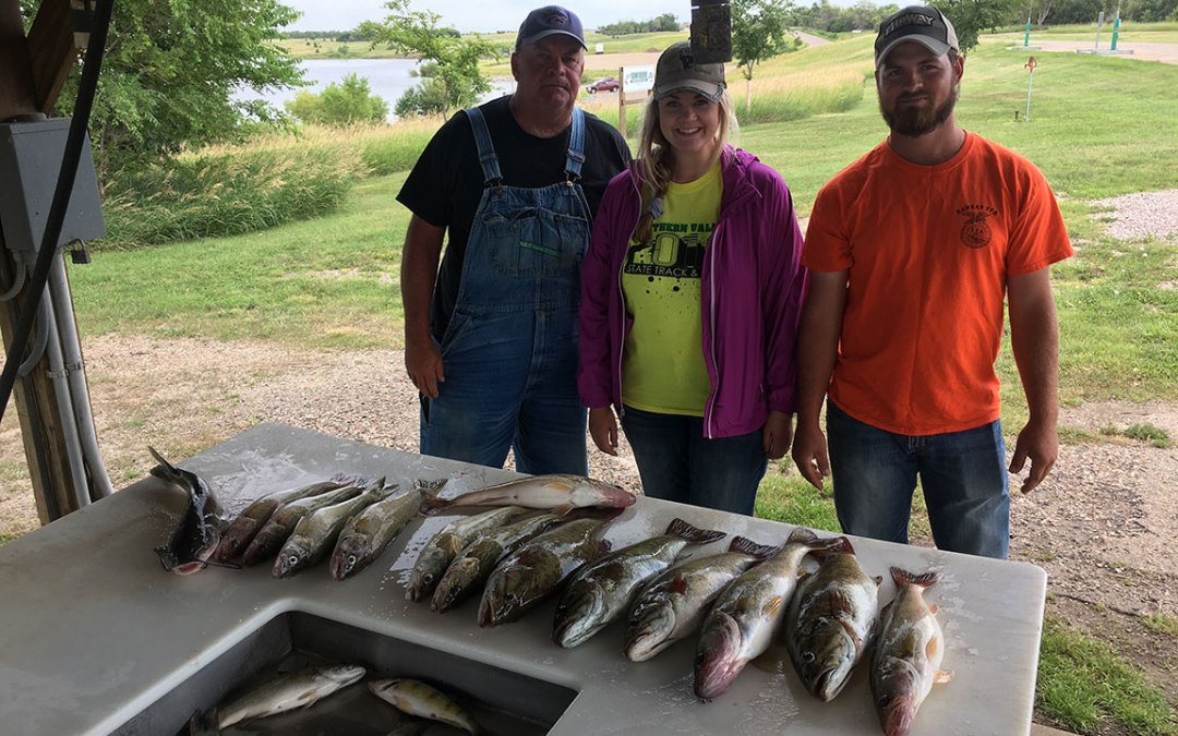 Healthy walleyes continue to grow on Lake Oahe