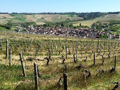 Hillside old vines overlooking Irancy.