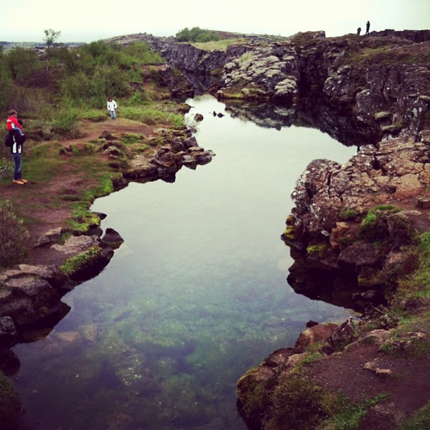 Thingvellir river channels #iceland #latergram
