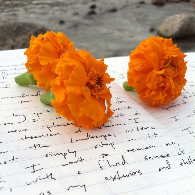 Last morning on the Ganga. Setting wishes and intention upon marigolds, and sending on down the river. #rishikesh #india #yoga