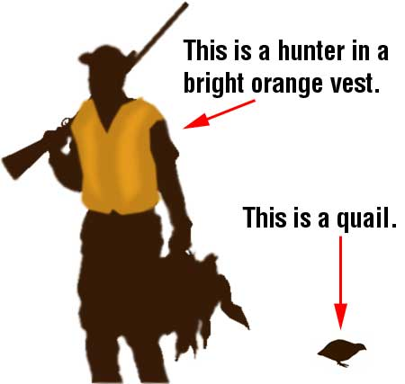 This is a hunter in a bright orange vest, and this is a quail.