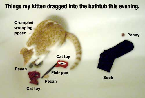My bathtub is a cat toybox