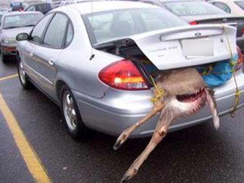 Is it deer season already?