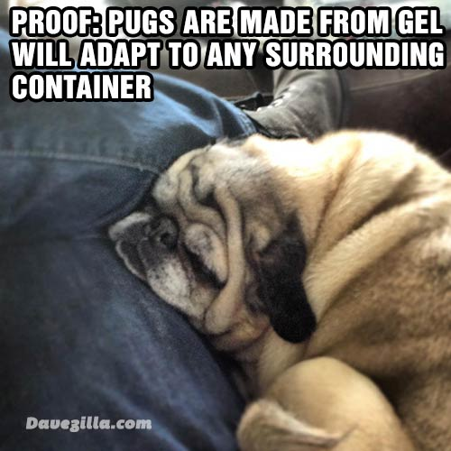 Pugs are made from gel and will adapt to any surrounding container.