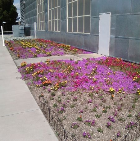 Flower bed behind the student union
