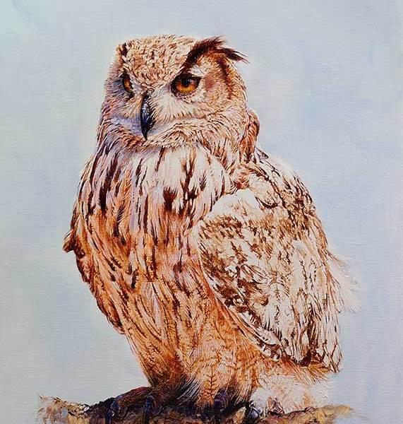 Eagle Owl Study