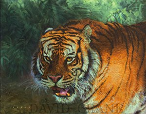 On The Prowl, Tiger Study