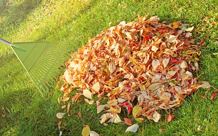Do I Need Rake Leaves