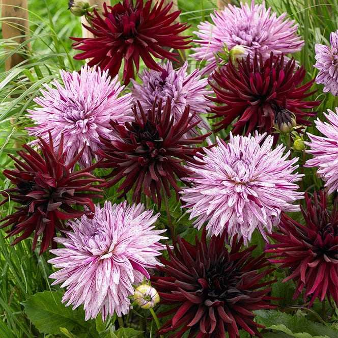 Types Flowers Violet