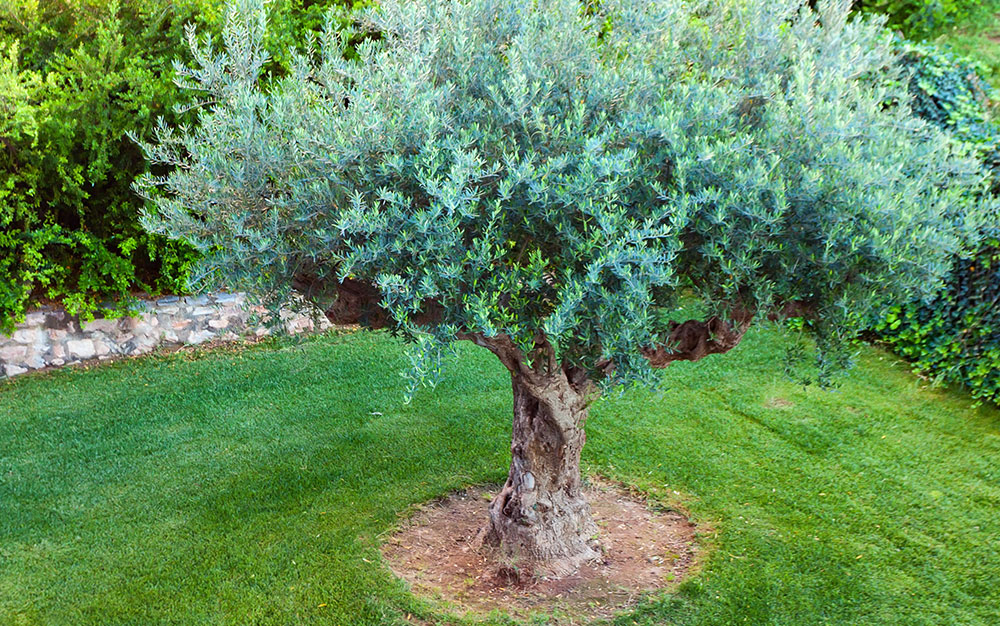 Ideas For Designing A Mediterranean Garden David Domoney