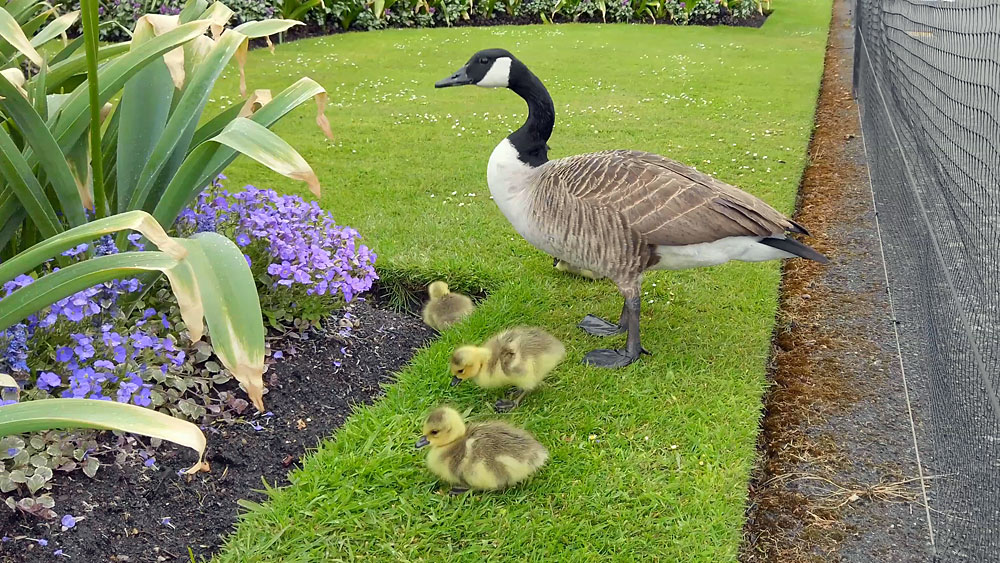 Springtime attractions at Kew Gardens