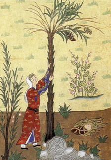 The Qur'anic Nativity: Mary shakes toward her the trunk of the date-palm (Turkish, 16th century).
