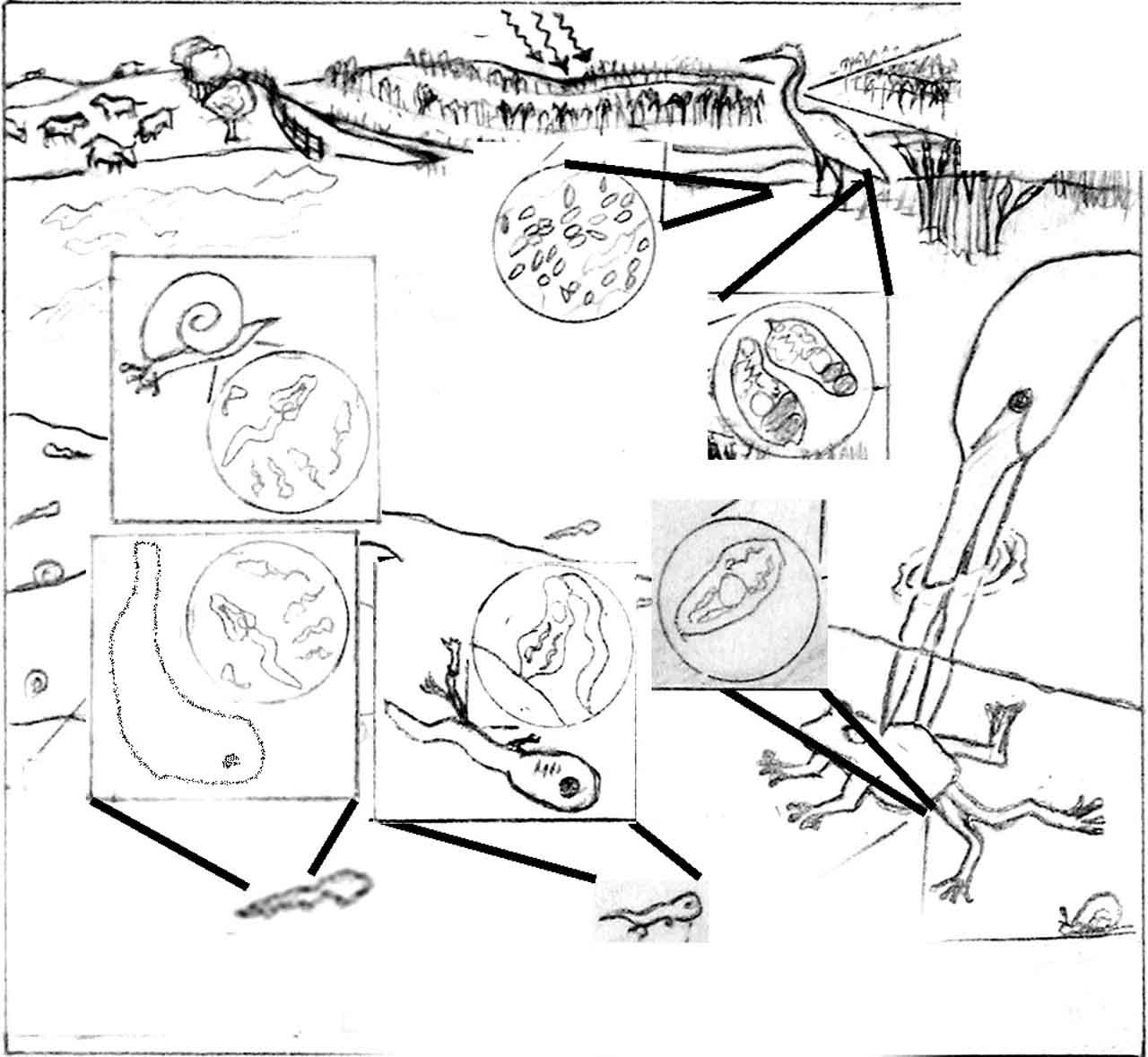 Circular Process Sketch Templates